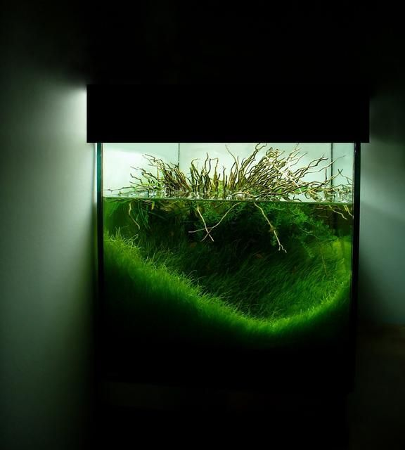 107 Best Images About Aqua On Pinterest Plants For