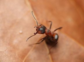 Cómo matar a las hormigas con bicarbonato de sodio  | eHow en Español