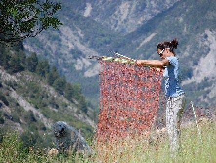 Annabelle Jeagger, élue de la région PACA, déléguée à la biodiversité s'est engagée comme éco-volontaire auprès de l'association FERUS pour mieux appréhender les enjeux du pastoralisme.  Cette élue écologiste a voulu se rendre compte par elle même de la situation sur le terrain dans le Mercantour entre la convention de Bern qui protège le loup et les bergers qui travaillent quotidiennement pour préserver leurs troupeaux.