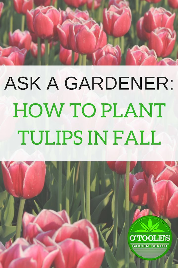 Autumn Is The Perfect Time To Plant Bulbs For The Spring Learn