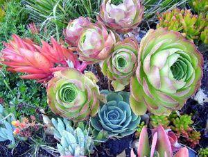 Best 25 Plants Around Pool Ideas On Pinterest