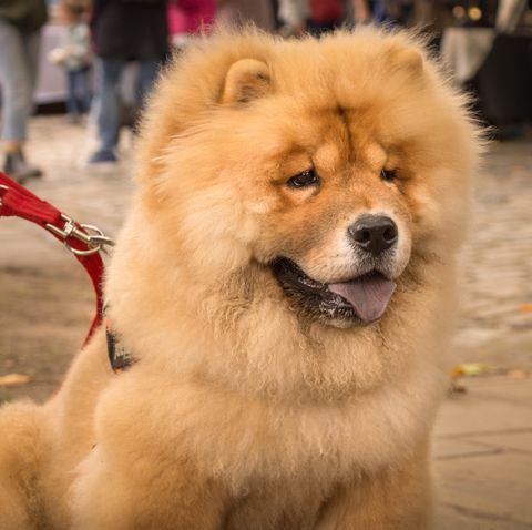 Dog Or Teddy Bear These 15 Breeds Are Bound To Confuse You Bear