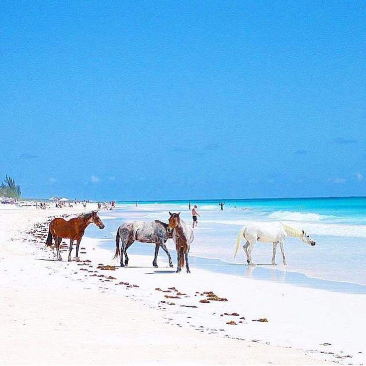 Best 25 Harbour Island Bahamas Ideas On Pinterest Pink