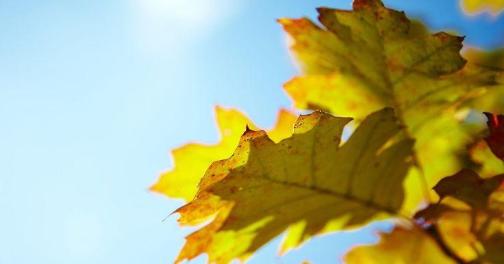 Estructura de la hoja de una planta. La hojas de las plantas quizás no sean tan maravillosas como las flores, pero son un elemento crucial en el crecimiento de la planta. La estructura de las hojas tiene un rol esencial en la la absorción de nutrientes, la fotosíntesis y la producción de alimentos.