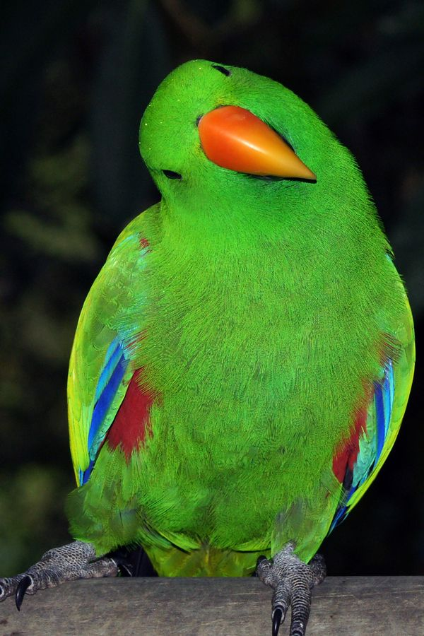 Spectacular Looking Green Birdie :)