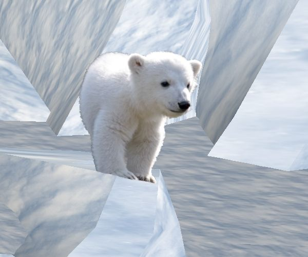 The habitats of polar bears are in and around water and on tundras (frozen land). Description from glogster.com. I searched for this on bing.com/images