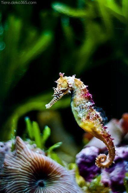 Schöne Bilder von einem erstaunlichen Regenbogentier