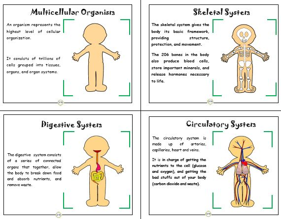 7 Best 1st Grade Science Vocabulary Cards Images On Pinterest