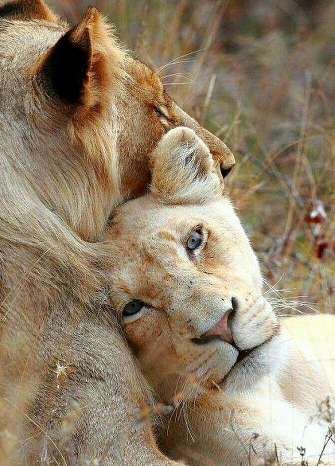 картинки с нежностью животных о любви