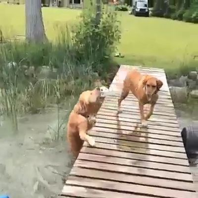 Cute doggos flying off of everything