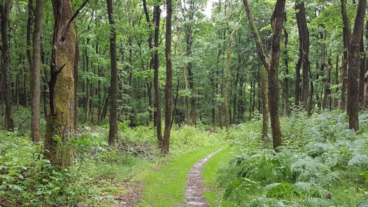 Nærmest regnskov