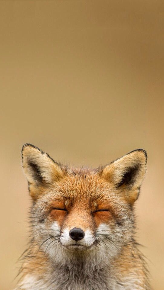 Pin by MAZme Z on iPhone Wallpapers. Fox, Fox series