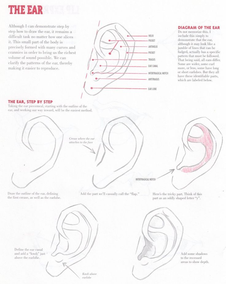 Ear tutorial- obviously everybody does not have the exact same ear, but this is the basic structure. Not the most fun or entertaining part to draw (unless you just really love ears) but good to know