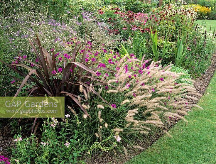 Image result for cordyline in garden