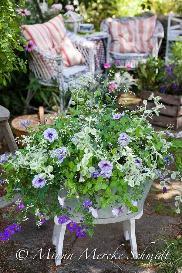 Fin sommarplantering: petunia, hängverbena och snötörel