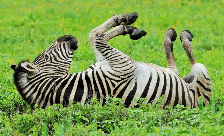 Kruger rains-Joep Stevens