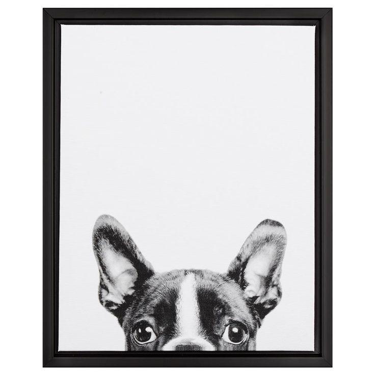 Peekaboo French Bulldog Framed Art
