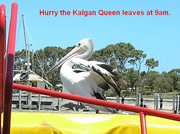 Kalgan Queen Pelican will check you in :)