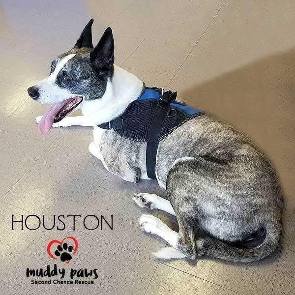 Dogs For Adoption Petfinder Pets Pet Adoption Siberian Husky Mix