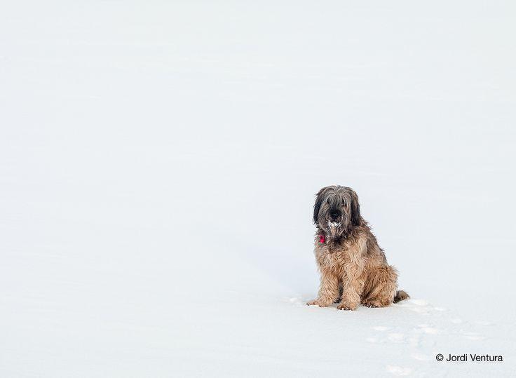 https://flic.kr/p/BHiNry | Crossing the Arctic Circle with Audi, my Catalan Shepherd.