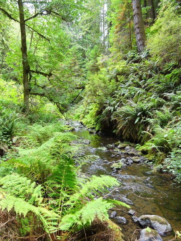 Van Damme State Park Fern Canyon Trail is a 7 mile out