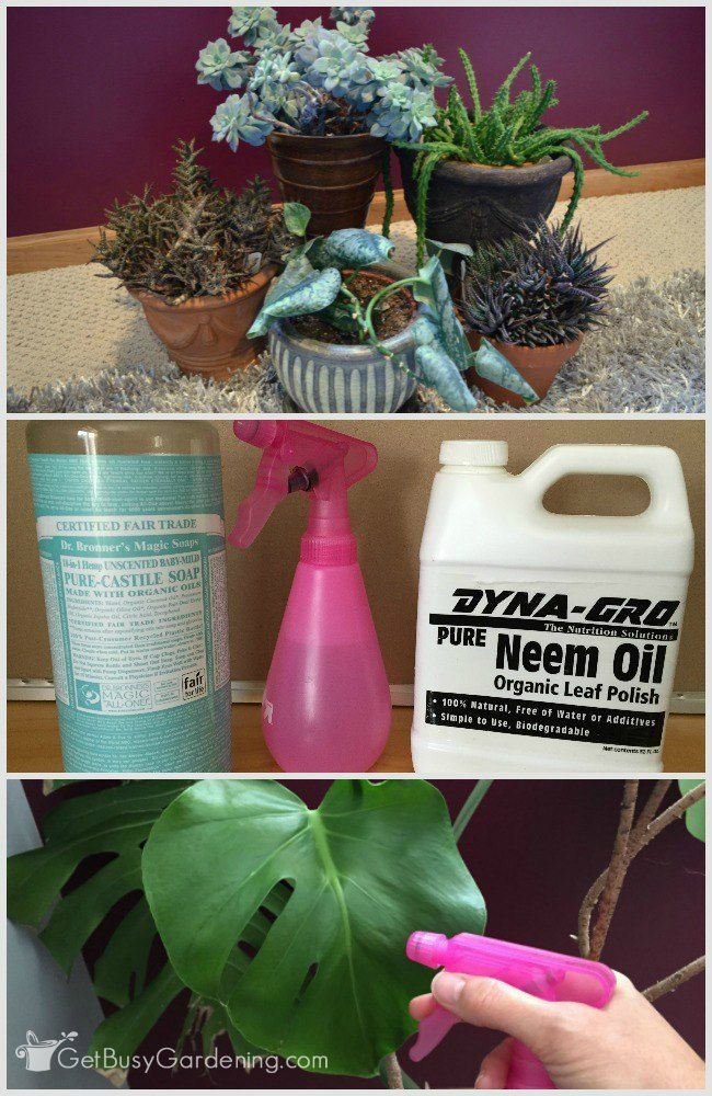 neem oil insecticide what is it and how to use neem oil on plants gardening tips ideas. Black Bedroom Furniture Sets. Home Design Ideas