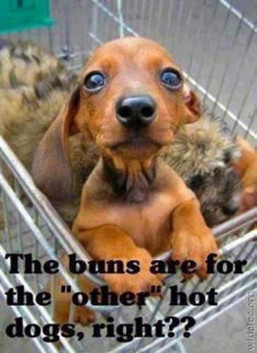 Weenie dog!