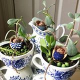 Come learn how to make these succulent teacup planters- adorable hibernating hazelnut mouse included!-at my fall critter upcycle workshop at the @johnwaltermuseum Spend a cozy autumn afternoon sitting by the fire in one of Edmontons oldest houses! We'll have snacks, tunes and also learn how to make loom knit owls!!! Call 311 to register!! Ages 10 and up (children under 16 must be accompanied by adult registrant) #yeg #yegworkshops #upcycle #workshop #succulents #teacup #mice #yegartist
