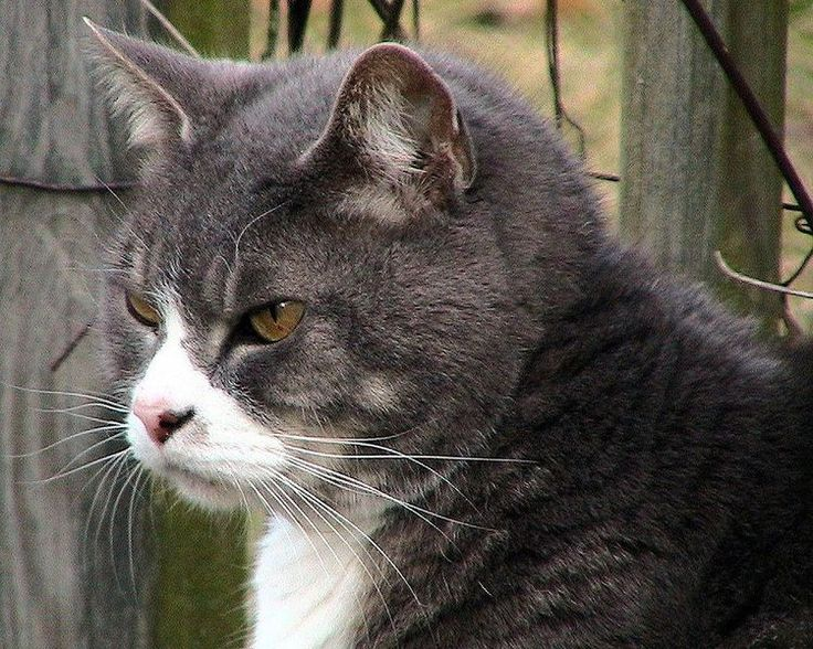 Discover Your Cat's Normal Life Span and Age in Human
