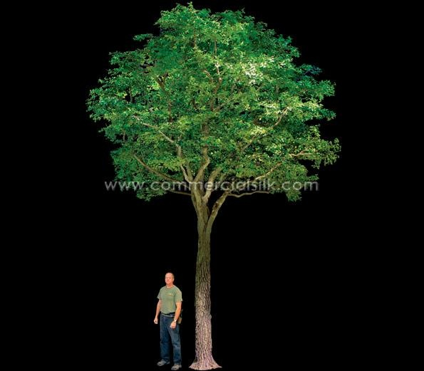 Commercial grade silk trees for indoors.  Better have high ceilings!