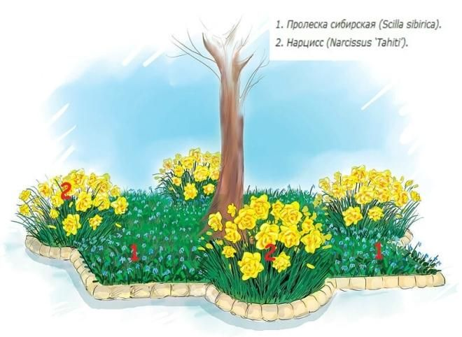 arrangement of flowers for flower bed under a tree