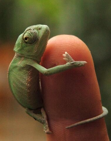 name cute chameleon - photo #14