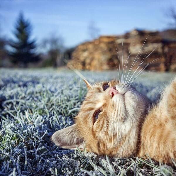 daydream kitteh. Thoughts of killing things that move.
