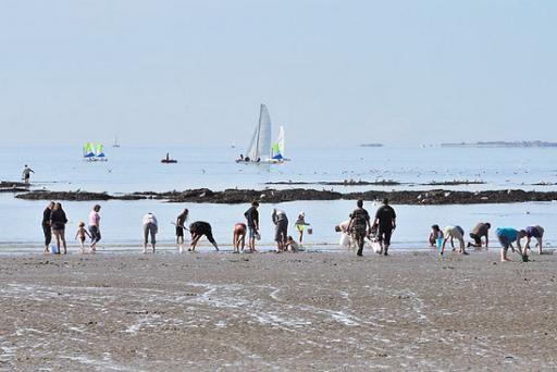 Pêche à pied à Damgan dans le Morbihan. Crédit F. Van Malleghem