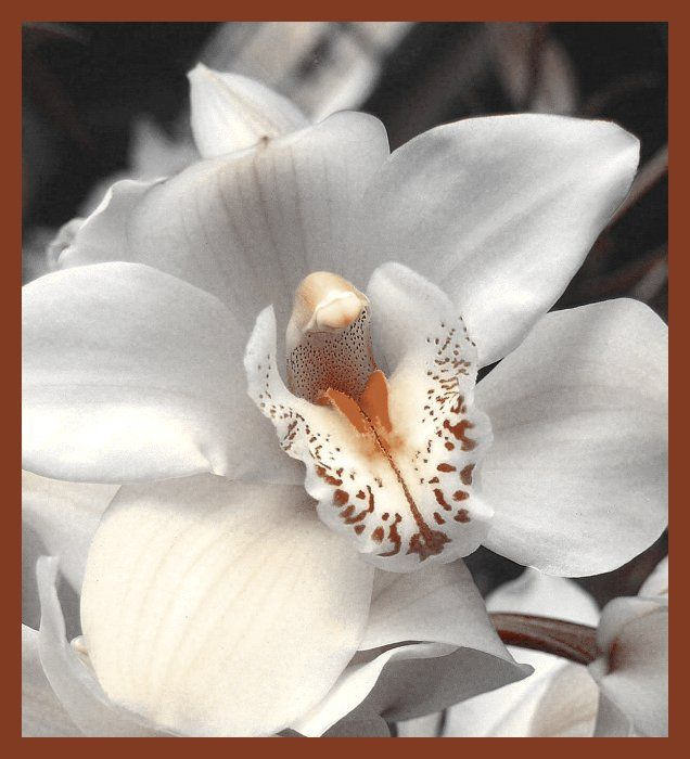 125 besten Orchids Bilder auf Pinterest   Exotische blumen, Gärtnern ...