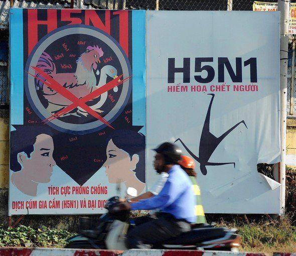 """[newsy] """"H5N1 조류독감 사람 간 전염 가능"""" http://i.wik.im/73917"""