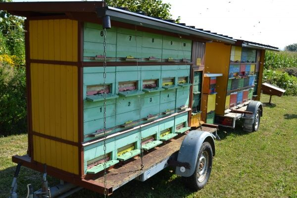 Résultat apiculture-haut-bugey.com trouvé sur Google