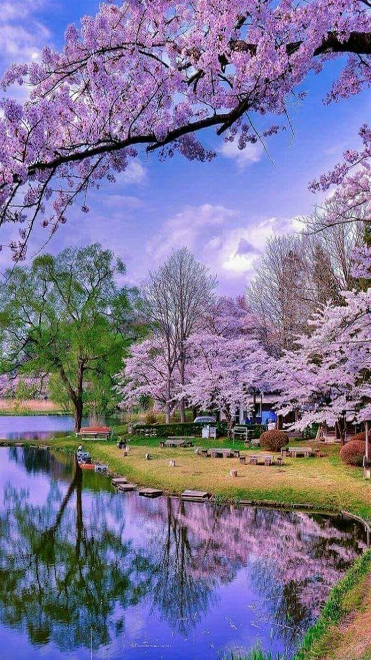 Landscape - Nature in bloom.