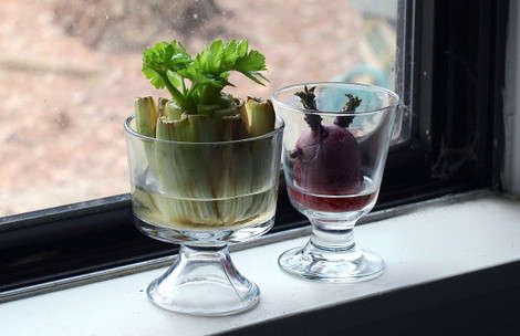 7 Plants You Can Grow from Kitchen Scraps | At Home - Yahoo Shine
