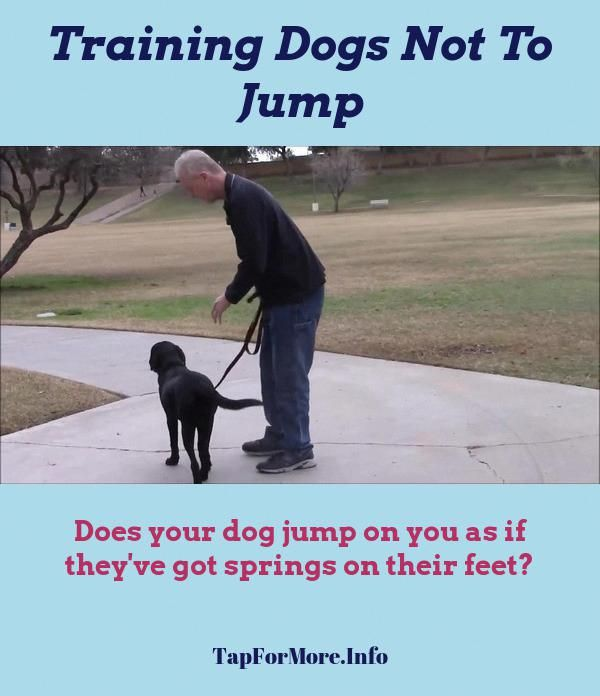 Stop Dog Jumping And Dog Training Tips Cesar Millan Check The