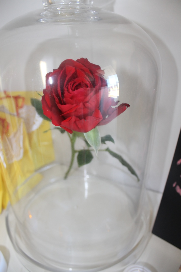 Jars And Roses On Pinterest