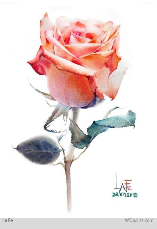The 25 best ideas about watercolor rose on pinterest for How to paint a rose in watercolour