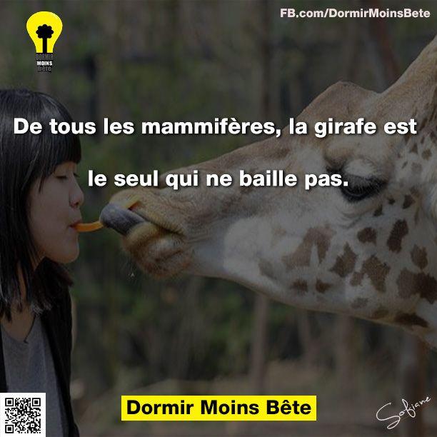 De tous les mammifères, la girafe est la seul qui ne baille pas.
