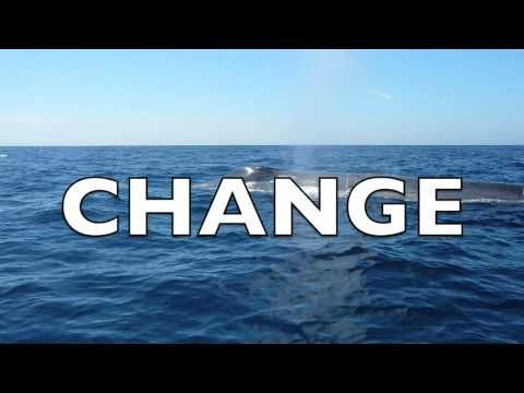 ▶ The Effects of Water Pollution on Marine Life - YouTube