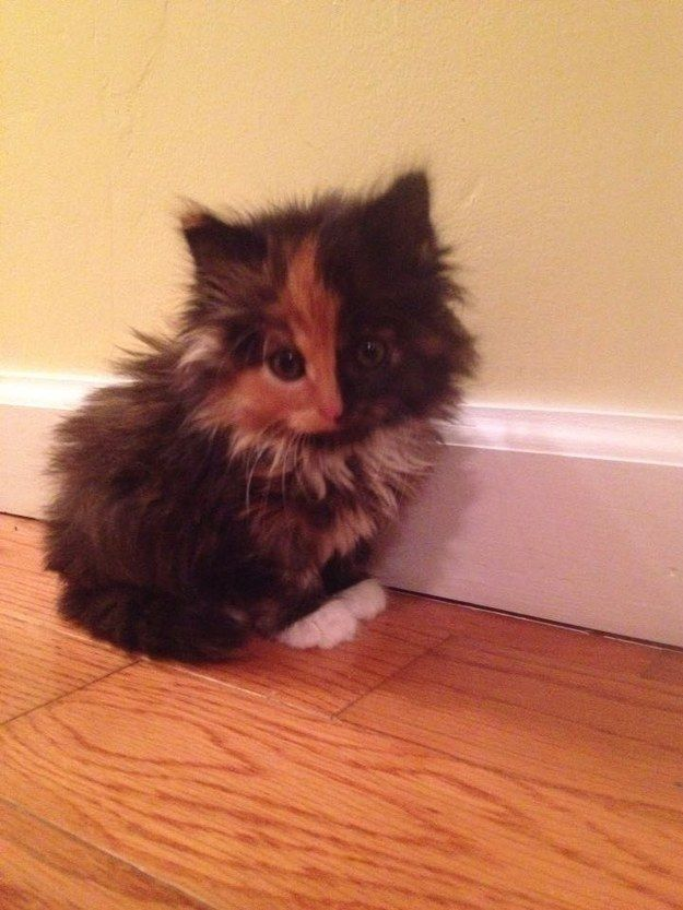 Cat people might be a little shy at first. | 21 Reasons You Should Fall In Love With A Cat Person