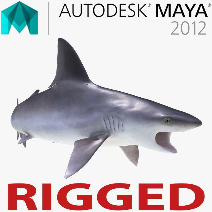 Ma Sandbar Shark Rigged - 3D Model