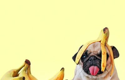 Health benefits of bananas for dogs