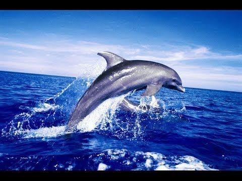 Волшебная музыка 2014- Звук моря и Голос дельфинов. Музыка для души