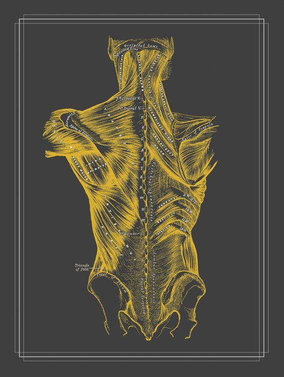 Grays Anatomy Muscles of the Back Massage Room by RelicsRemixt