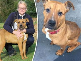 A STARVED dog left so emaciated that he came within a whisker of being put down is now enjoying a new lease of life.